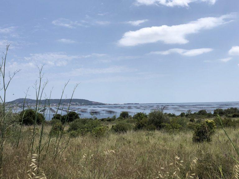 [Marseillan Plage] : Séjour en camping près de l'Étang de Thau